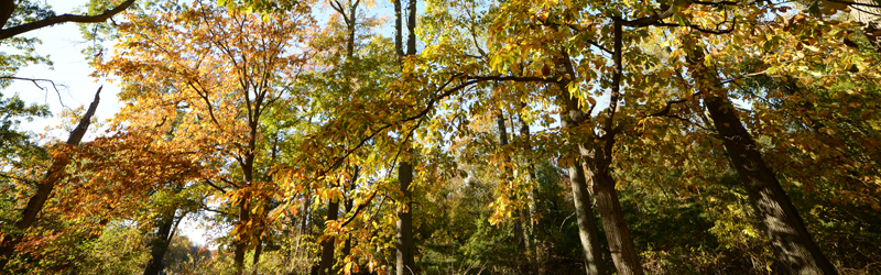 int_banner_treetops