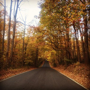 Herndon Ave in the Fall. H. Moring.